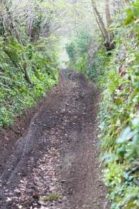"""Beau chemin, malheureusement un peu trop fréquenté par les quads et autres motos """"vertes""""... Il ne reste plus de végétation au sol !"""