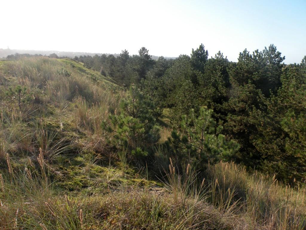 Stand de tir de Bréville-sur-Mer Espace remarquable du littoral, l'ancien terrain militaire devra être réincorporé au massif dunaire après restauration (élimination totale ou partielle des conifères)