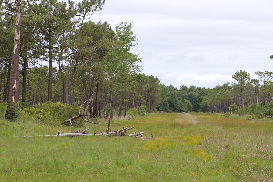 La lande est communale, la forêt de pins est gérée par l'ONF et les pare-feu sont entretenus par la communauté de commune afin de favoriser la biodiversité.