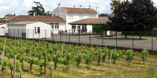 vigne-ecole