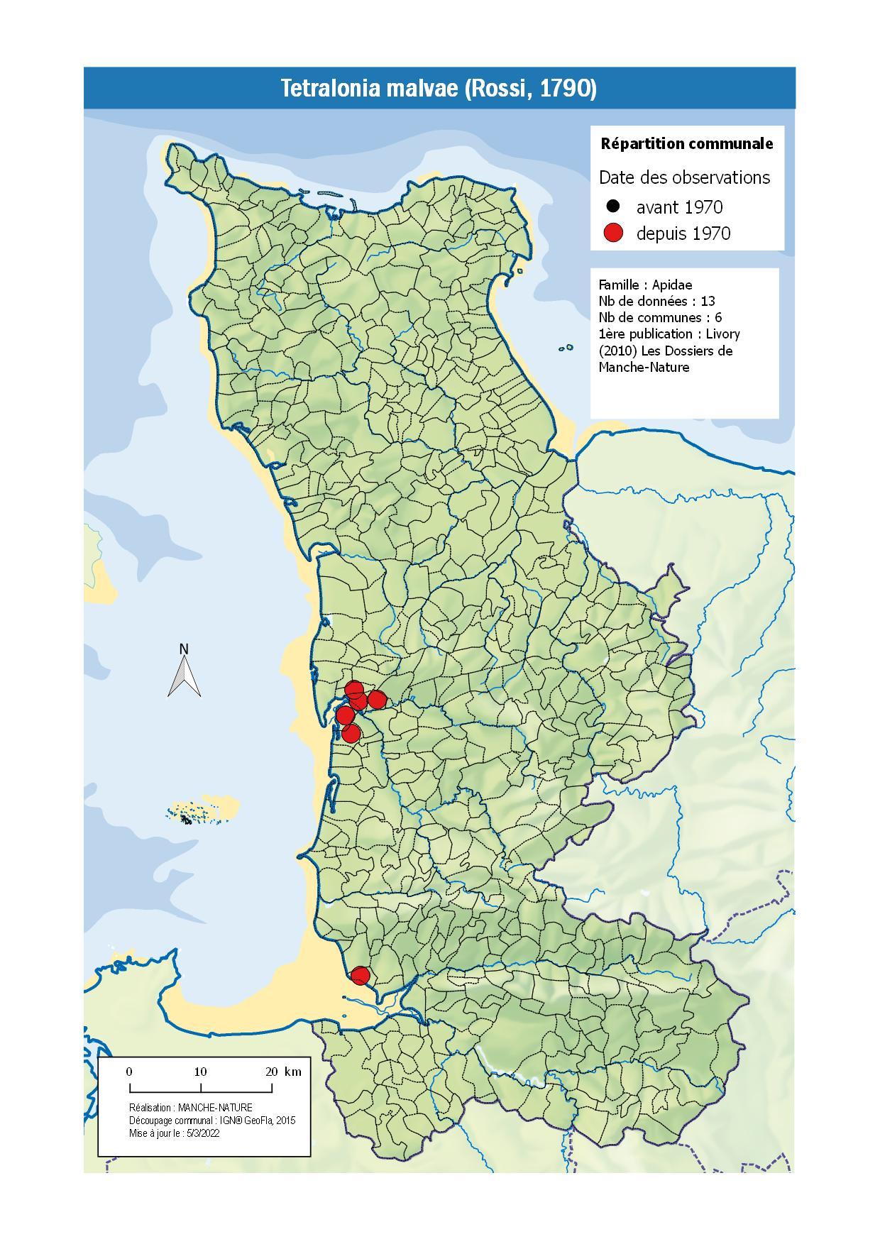 tetralonia-malvae-rossi-1790